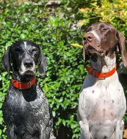 Blue & Huck